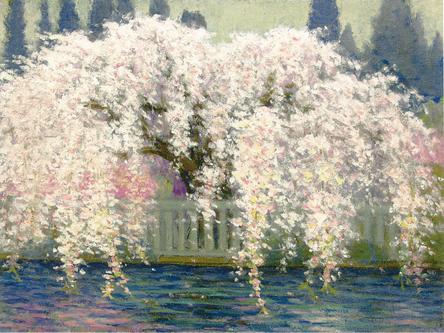 奥西先生 久遠寺の桜