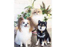 羊毛フェルトで作る愛犬・愛猫のイメージ
