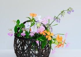 和の花あしらい~山野草を楽しむ~のイメージ